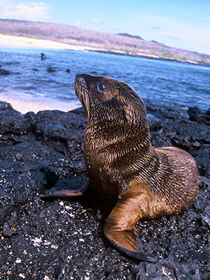 Galapagos Research - Study Abroad Journal in 2003 - Steven Andrew Martin