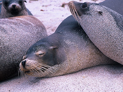 Seals at San Cristobal, Galapagos - Dr Steven Andrew Martin - Environmental Studies