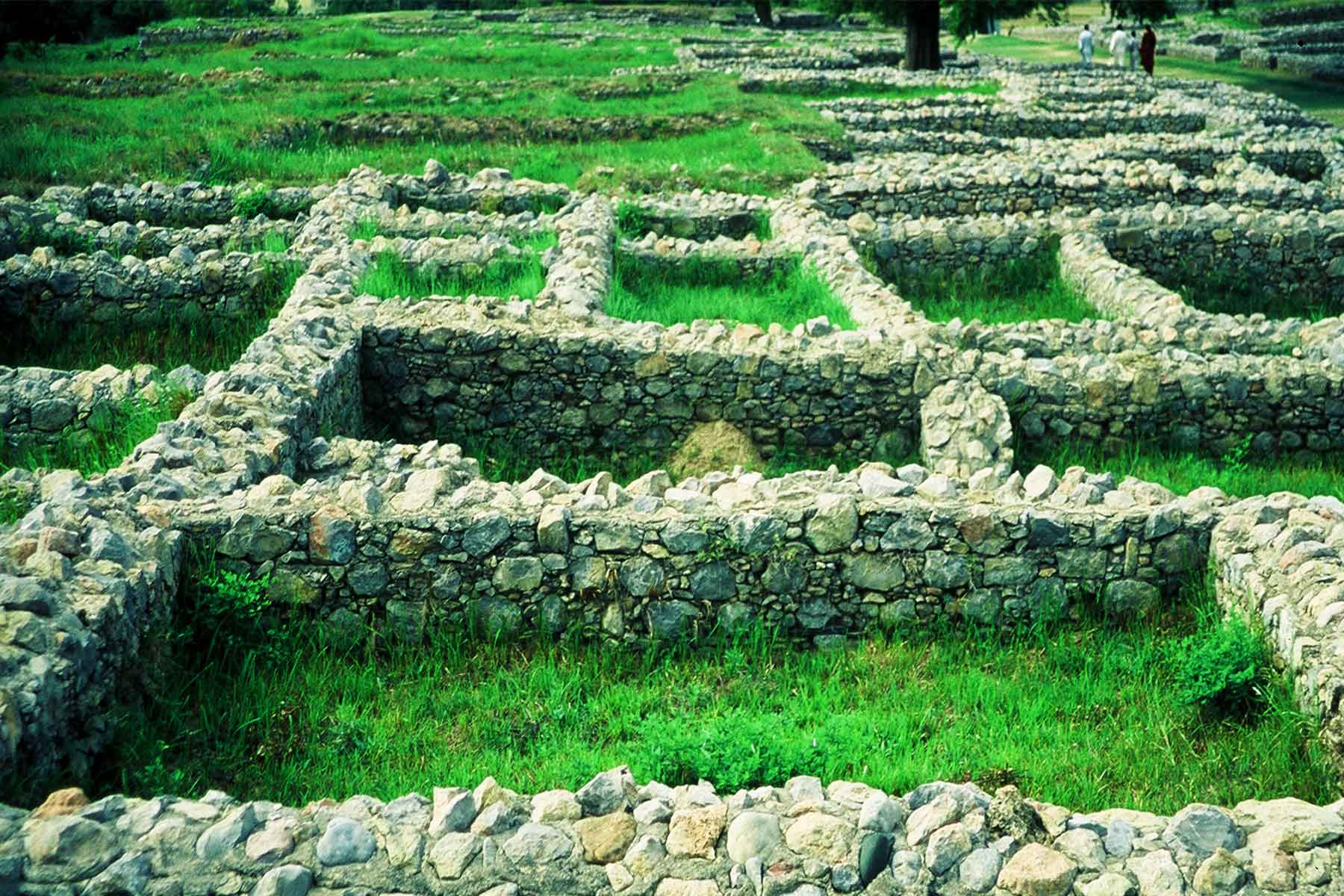 Sirkap archaeological site | Taxila Pakistan | Dr Steven Martin | Silk Road Research | Bactrian King Demetrius