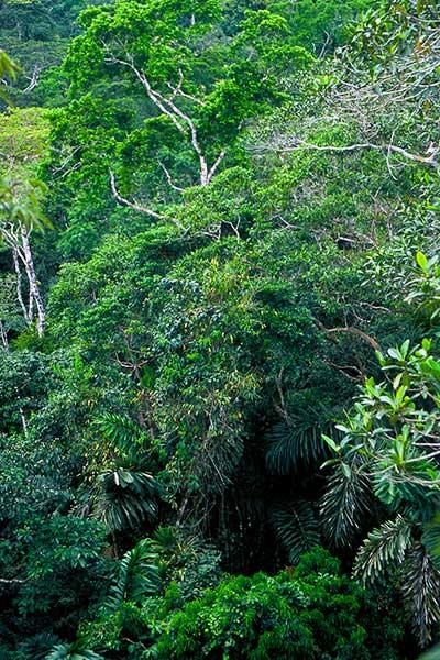Tiputini Biodiversity Station - Steven Andrew Martin - Amazon Photo Journal 2003