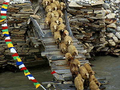 Sheep crossing the Rongbuck Stream - Tibet Photo Journal - Steven Andrew Martin
