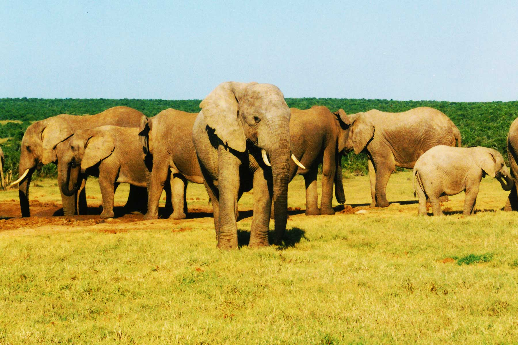 Addo Elephant National Park | South Africa | Dr Steven Andrew Martin | Wildlife Conservation | School for International Training