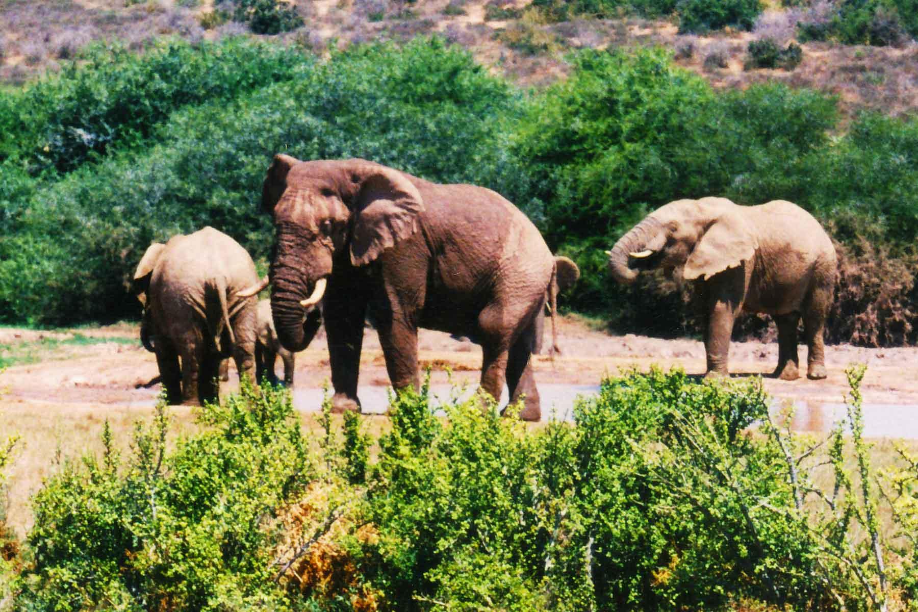 South Africa | Dr Steven A Martin | Addo Elephant Park | Learning Adventure | Environmental Studies | International Education Online