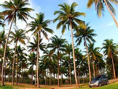 Phang Nga Province, Andaman Coast Thailand Photo Journal - Dr Steven Andrew Martin