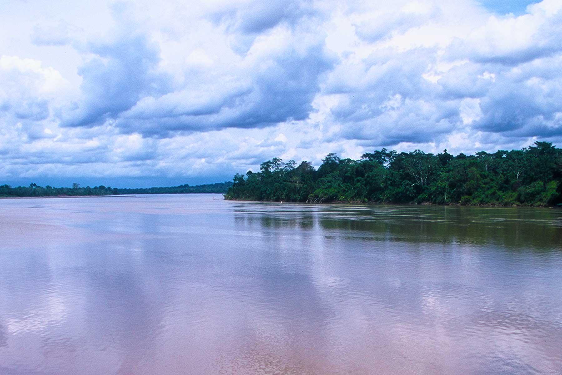 Tiputini Biodiversity | Amazon Rainforest Photo Journal | Dr. Steven Andrew Martin | Environmental Studies