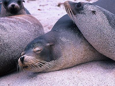 Seals at San Cristobal, Galapagos - Dr Steven Andrew Martin - Environmental Studies