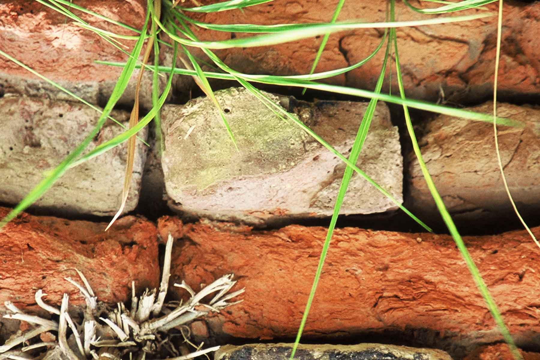 Red Harappan bricks - Indus Valley Civilization - Photo Steven Andrew Martin - Pakistan Learning Adventure