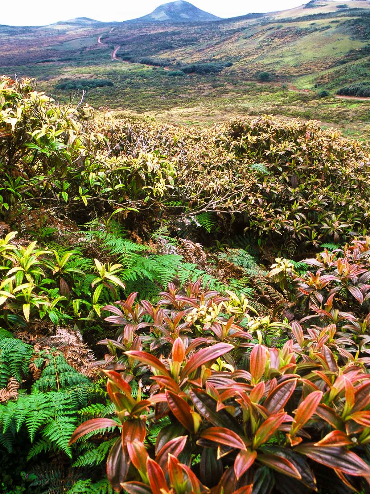 San Cristobal Landscape | Biodiversity | Galapagos Photo Journal | Steven Andrew Martin | Learning is an Adventure
