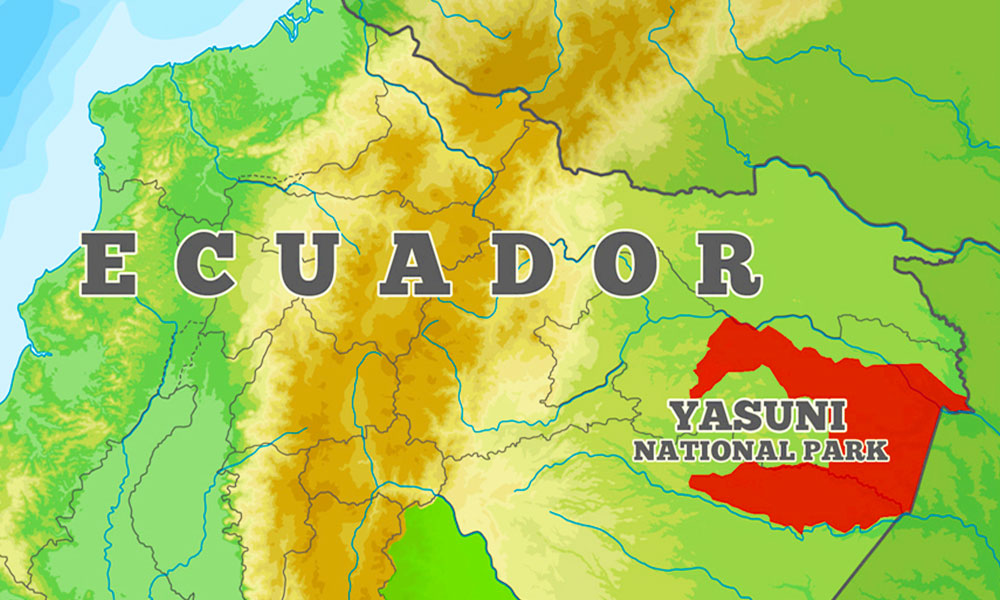 Yasuni National Park Ecuador - Dr Steven A Martin - Amazon Rainforest Photo Journal - Environmental Studies